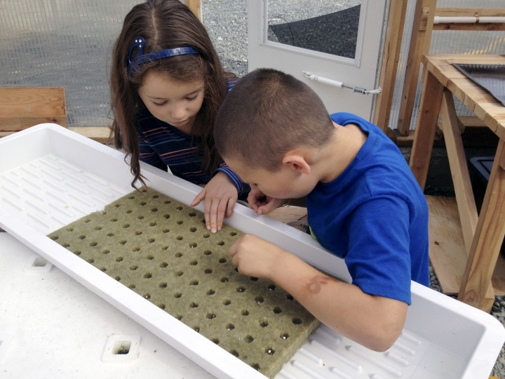 In this Sept. 1, 2015, photo, Lily West, left, and Logan Strong plant seeds for their school's wood-heated aquaponics greenhouse in Kasaan, Alaska. The state has released a new guidebook that other Alaska schools and community groups how to build greenhouses heated with a plentiful local resource, wood. (Colter Barnes via AP)