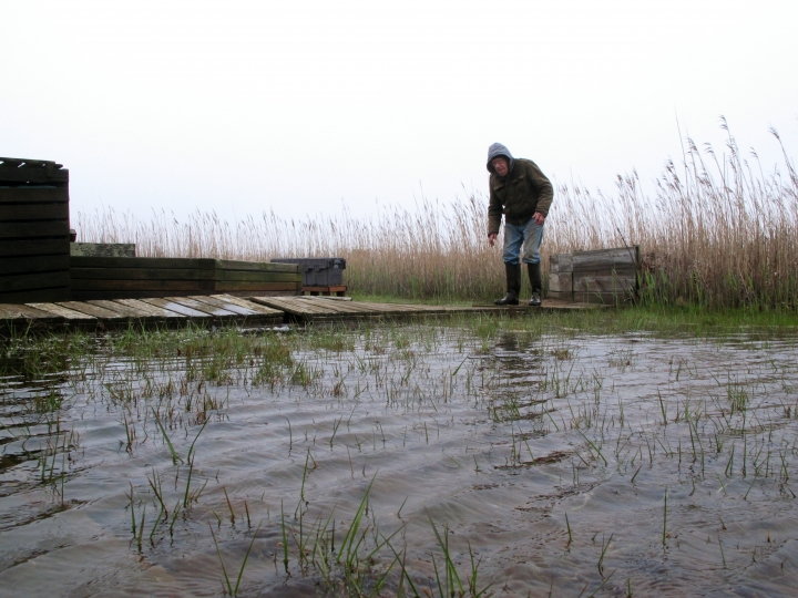 In this April 26, 2017, photo Jim O'Neill walks across a makeshift boardwalk he built in his back yard in Manahawkin N.J., because the property is almost always under water, even on sunny days. He lives in a low-lying area near the Jersey shore, and is often affected by back bay flooding. (AP Photo/Wayne Parry)