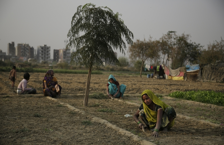 FILE- In this March 7, 2017 file photo, Indian women farmers work in their farm on the eve of International Women's Day on the outskirts of New Delhi, India. Researchers report a link between crop-damaging temperatures and suicide rates in India, where more than 130,000 farmers end their lives every year. (AP Photo/Altaf Qadri, File)