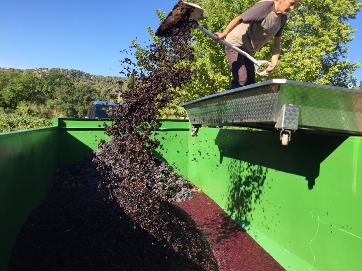 This Sept. 19, 2016 photo shows a winery worker in the Provence region of France transferring ripe grapes into a bin as the harvest gets underway. (AP Photo/Sally Carpenter Hale)