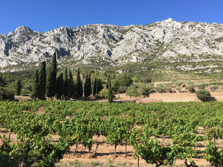 This Sept. 19, 2016 photo shows the view of vineyards and mountains from Domaine Terre de Mistral in France, 20 minutes outside Aix-en-Provence. In addition to making dry rosė, white and red wines, Terre de Mistral produces olive oil. (AP Photo/Sally Carpenter Hale)