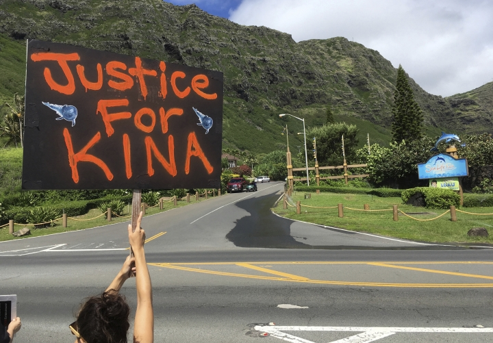 In this May 13, 2017 photo, an activist holds a sign during a protest outside Sea Life Park in Waimanalo, Hawaii. A former U.S. Navy research whale that has contributed to groundbreaking science for the past 30 years is again making waves after being sold to a marine amusement park in Hawaii. Animal-rights activists say Kina, a false killer whale, deserves a peaceful retirement in an ocean-based refuge, but is instead being traumatized by confinement in concrete tanks at Sea Life Park. But Kina's former Navy trainer and a longtime marine mammal researcher say no such sea sanctuaries exist, and the park is the best place for the 40-year-old toothy cetacean. (AP Photo/Caleb Jones)