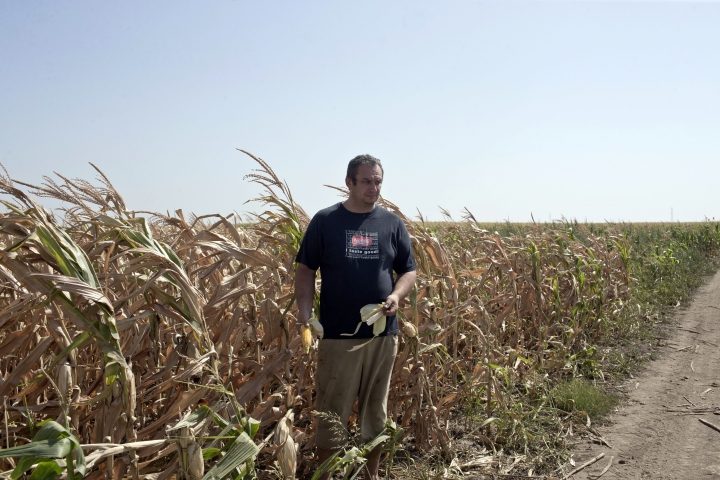 Pavel Tordaj, 42, a farmer, stands inside his field of corn which has been decimated by drought, in Padina, Serbia, Thursday, Aug. 10, 2017. Authorities and experts are warning that extremely hot and dry summer this year in the Balkans has decimated crops, dried rivers and hurt the animal world. (AP Photo/Marko Drobnjakovic)