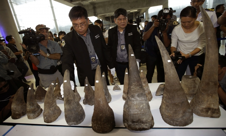 """FILE - In this March 14, 2017, file photo, customs officers display seized rhino horns during a press conference at the Suvarnabhumi airport, Bangkok, Thailand. With wildlife trafficking escalating worldwide, some countries are starting to """"follow the money"""" in an effort to track down the kingpins financing crime rings. The United Nations urged the world's countries to adopt laws that allow wildlife crimes to be investigated by money laundering agents who can have assets seized. (AP Photo/Sakchai Lalit, File)"""