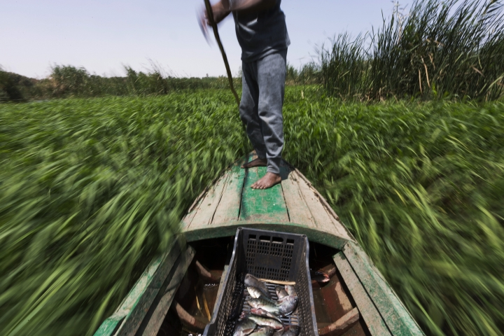 FILE - In this April 12, 2015 FILE photo, Sayed Ahmed Abdoh poles his boat to check his fish traps in the Nile River, near Abu al-Nasr village, about 770 kilometers (480 miles) south of Cairo. The only reason Egypt has ever existed from ancient times until today is because of the Nile River, which provides a thin, fertile strip of green through the desert. For the first time, the country fears a threat to that lifeline, as Ethiopia rushes to finish a massive hydroelectric dam.(AP Photo/Hiro Komae, File)