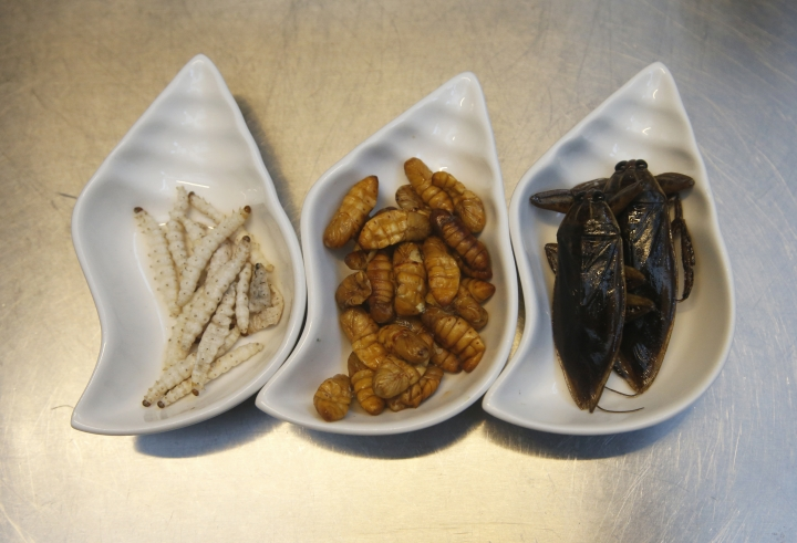 In this Tuesday, Sept. 12, 2017 photo, ingredients use in some of dish from left to right, bamboo worms, silkworm, giant water beetle at Inspects in the Backyard Restaurant, Bangkok, Thailand. Ants and beetles in the kitchen? Normally that'd close down a restaurant, but bugs in the beef ragu and pests in the pesto are the business plan for one Bangkok eatery. Tucking into insects is familiar in Thailand, where street vendors pushing carts of fried crickets and buttery silkworms feed locals and tourists alike. But bugs are now fine-dining at a restaurant aiming to revolutionize views of nature's least-loved creatures. (AP Photo/Sakchai Lalit)