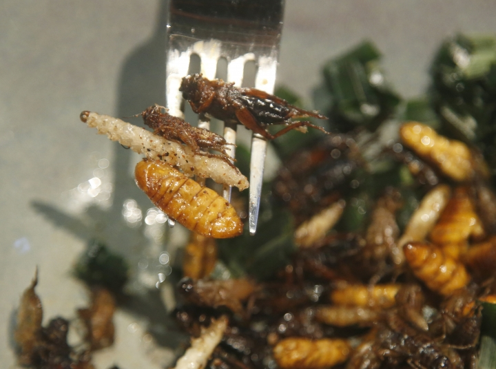 In this Tuesday, Sept. 12, 2017 photo, Kelvarin Chotvichit, a lawyer from Bangkok, uses a fork bamboo worms, silkworm and cricket fired before eats†at Inspects in the Backyard restaurant, Bangkok, Thailand. Tucking into insects is nothing new in Thailand, where street vendors pushing carts of fried crickets and buttery silkworms have long fed locals and adventurous tourists alike. But bugs are now fine-dining at the Bangkok bistro aiming to revolutionize views of nature's least-loved creatures and what you can do with them. (AP Photo/Sakchai Lalit)