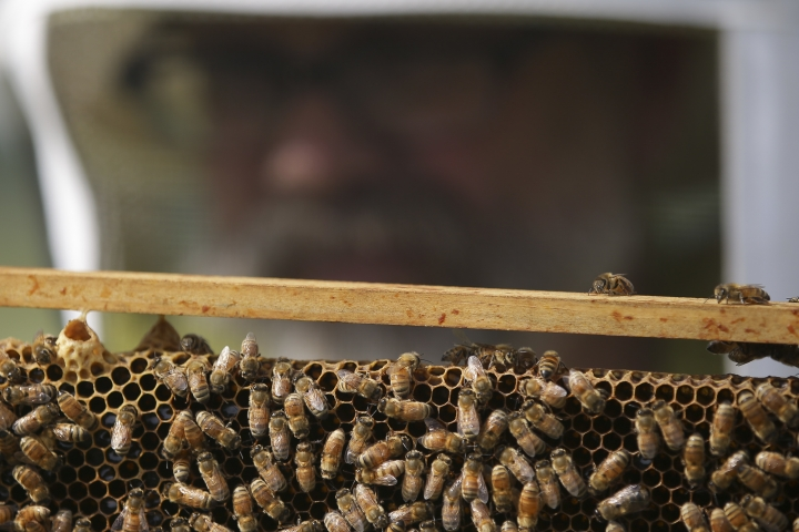 FILE - In this May 27, 2015 file photo, volunteer Paul Reinhart, a zoo keeper at the Cincinnati Zoo, checks honey bee hives for queen activity and performs routine maintenance as part of a collaboration between the Cincinnati Zoo and TwoHoneys Bee Co., at EcOhio Farm in Mason, Ohio. A new study published Thursday, Oct. 5, 2017, in the journal Science found something in the world's honey that is not quite expected or sweet: the controversial pesticides called neonicotinoids. Scientists say it is not near levels that would come close to harming humans, but it is a big worry for bees, which already are in trouble. (AP Photo/John Minchillo, File)