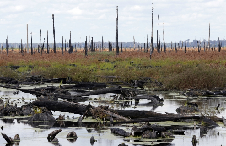In this Wednesday, Sept. 13, 2017 photo, burned-out stumps of white cypress trees are reflected in the waters of the Great Dismal Swamp in Corapeake, N.C. The U.S. government is trying to undo the damage from two centuries of logging at the swamp. (AP Photo/Steve Helber)