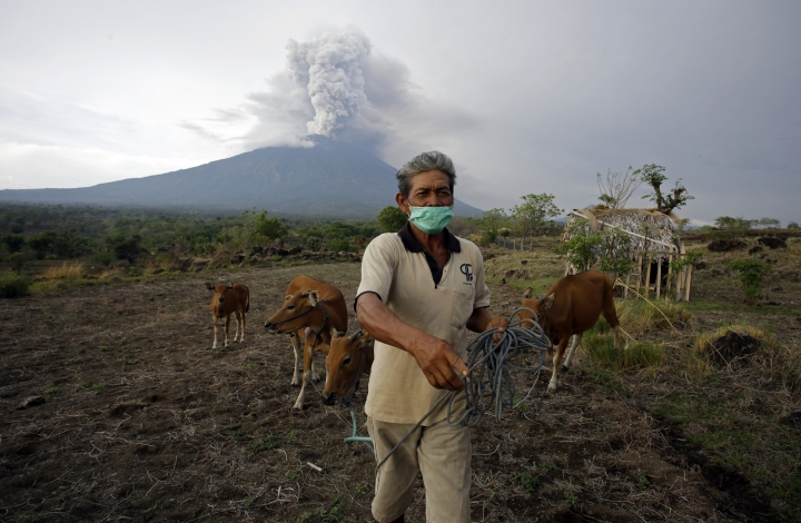 A villager leads his cows to a filed with Mount Agung volcano erupting in the background in Karangasem, Bali, Indonesia, Tuesday, Nov. 28, 2017. Indonesia's disaster mitigation agency says the airport on the tourist island of Bali is closed for a second day due to the threat from volcanic ash. (AP Photo/Firdia Lisnawati)