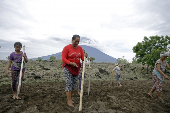 Villagers work in a field with a backdrop of th eMount Agung volcano erupting in Karangasem, Bali, Indonesia, Wednesday, Nov. 29, 2017. The volcano with a deadly history on Indonesia's Bali, one of the world's most popular resort islands, has spewed ash 7,600 meters (4.7 miles) high and closed the island's international airport for a third day Wednesday. (AP Photo/Firdia Lisnawati)