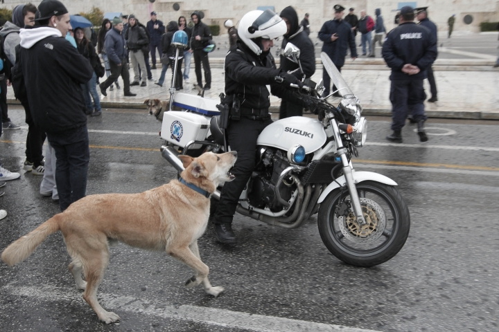 "FILE - In this Feb. 20, 2012, file photo, a stray dog, called by protesters Loukanikos (Sausage), barks to a motorcyclist policeman as high school students block the avenue outside the Greek Parliament during an anti-austerity protest in Athens. A film by Australia's Mary Zournazi, ""Dogs of Democracy,"" highlights the life and times Loukanikos. He became a symbol of the anti-austerity protests in Greece after showing up to stand alongside the humans on the front lines. (AP Photo/Dimitri Messinis, File)"
