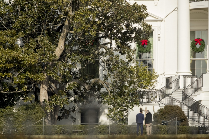 Members of the White House staff inspect the trimming of the famed Magnolia tree, Wednesday, Dec. 27, 2017, planted on the south grounds of the White House in Washington by President Andrew Jackson in 1835. (AP Photo/Andrew Harnik)