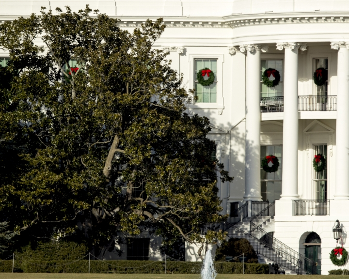 A large portion of a famed Magnolia tree, at left, photographed from the Ellipse in Washington, Tuesday, Dec. 26, 2017 and planted on the south grounds of the White House by President Andrew Jackson in 1835 has become too weak to remain standing. Removal is planned for this week while President Donald Trump and his family are away for the holidays. (AP Photo/Andrew Harnik)