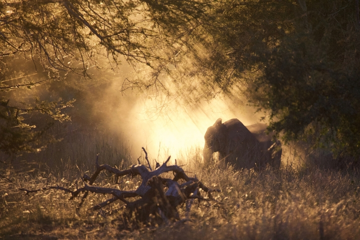 In this 2016 photo provided by Robert Pringle, elephants feed at sunset in Gorongosa National Park, Mozambique. Although some animals are killed in the crossfire or by mines, war primarily changes social and economic conditions in a way that make it tough on animals, said study co-author Pringle, an ecologist at Princeton University. Gorongosa's elephants and other wildlife were devastated by civil war in the 1980s and 90s, but have recovered dramatically over the past decade thanks to a pioneering effort by the Mozambican government to enlist conservationists, scientists, and local communities in ecological restoration. (Robert Pringle via AP)
