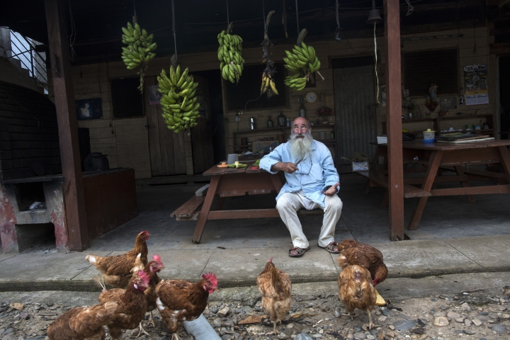 In this Jan. 10, 2018 photo, Father Pablo Zabala, better known as Padre Pablo, sits underneath bunches of bananas he has harvested while feeding a flock of chickens at the parish in Boca Colorado, part of Peru's Madre de Dios region. Zabala has lived in the Amazon for 24 years and spent the last 10 running a Catholic parish that works with about two dozen mining camps. He first traveled to the Amazon in 1978 when, as a young biologist, he collected butterflies and condors for his university's museum in Spain. (AP Photo/Rodrigo Abd)