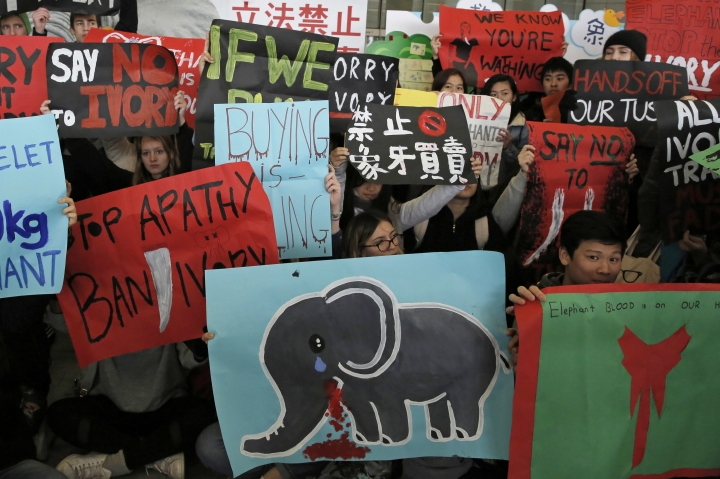 Animal conservation activists hold placards and a picture of an elephant outside the Legislative Council, Wednesday, Jan. 31, 2018 to urge Hong Kong lawmakers to approve a ban on ivory sales. (AP Photo/Kin Cheung)