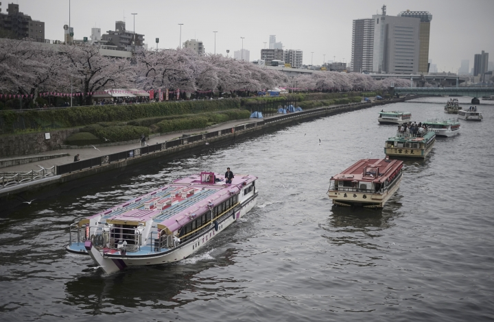 FILE - In this April 8, 2017, file photo, a tourist boat passes by other boats staying near the cherry blossoms in full bloom along the Sumida River in Tokyo. While beach destinations remain popular for spring break, travel agents say customers are also demanding unique cultural experiences and active outdoorsy adventures. (AP Photo/Eugene Hoshiko, File)