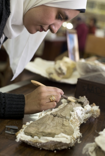 In this Saturday, Feb. 3, 2018 photo, paleontologist Mai el-Amir, who was involved in Mansoura university's excavation of a Cretaceous period dinosaur, works on a bone at a laboratory in Mansoura, Egypt. Researchers from the university discovered a new species of long-necked herbivore, which is around the size of a city bus, in the western desert of Egypt. It could be just the tip of the iceberg of other finds and experts say the discovery could shed light on a particularly obscure period of history for the African continent. (AP Photo/Amr Nabil)