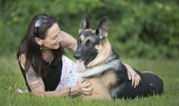 In this 2017 image provided by Sue Condreras, Fanucci, a German shepherd, poses with handler Sue Condreras last summer in upstate New York. Fanucci's right rear leg was shattered in a van accident in 2014, leaving his show career in doubt. He has become one of the nation's top German shepherds going into the Wesminster Kennel Club show that begins Monday. (Kenneth Beatty/Sue Condreras via AP)