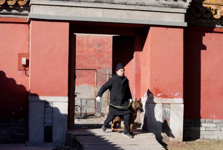Head of canine patrol squad Chang Fumao takes a guard dog for a daily training session at the Forbidden City in central Beijing, China February 12, 2018. Picture taken February 12, 2018. REUTERS/Jason Lee
