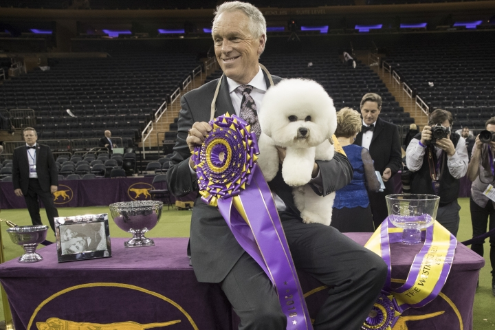 Handler Bill McFadden poses for photos with Flynn, a bichon frise, after Flynn won best in show during the 142nd Westminster Kennel Club Dog Show, Tuesday, Feb. 13, 2018, at Madison Square Garden in New York. (AP Photo/Mary Altaffer)