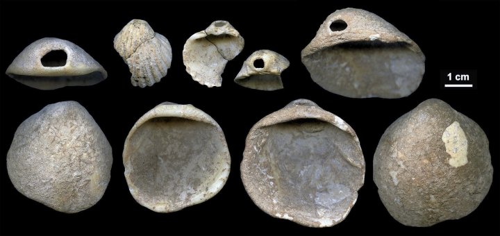 This undated image provided by João Zilhão in February 2018 shows perforated shells found in sediments in the Cueva de los Aviones near Cartagena, Spain. The artifacts date to between 115,000 and 120,000 years ago. New discoveries in some Spanish caves give the strongest evidence yet that Neanderthals created art. (João Zilhão via AP)