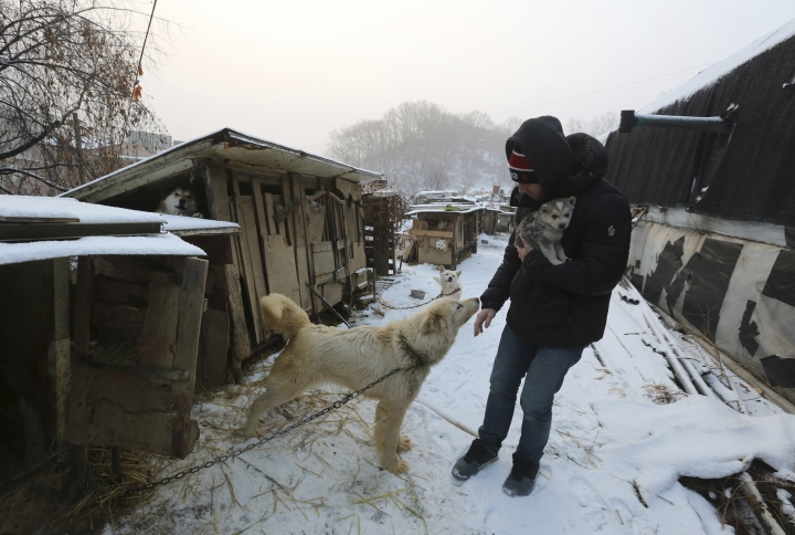 In this Friday, Feb. 23, 2018, photo, Matthew Wilkas, American freestyle skier Gus Kenworthy's boyfriend, watches a dog at a dog meat farm in Siheung, South Korea. Kenworthy saved five stray dogs during the Sochi Olympics four years ago and is considering adopting one of the many puppies he met Friday after finishing competition the Pyeongchang Games. (AP Photo/Ahn Young-joon)
