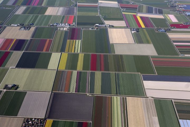 FILE - In this May 4, 2016, file photo, fields of blossoming tulips are shown in Den Helder, northern Netherlands. (AP Photo/Muhammed Muheisen, File)