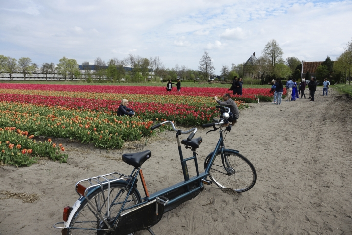 This April 14, 2017 photo provided by Martino Masotto shows tourists snapping photographs of tulip fields near Lisse, Netherlands. (Martino Masotto via AP)