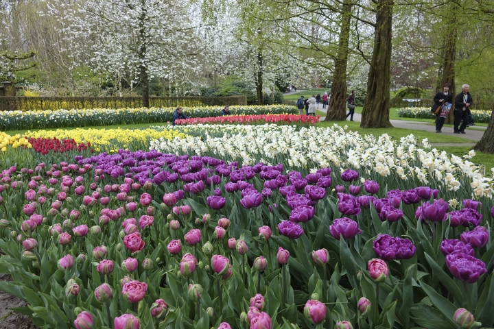 This April 14, 2017 photo provided by Martino Masotto shows a garden of tulips and other spring-flowering bulbs in the Keukenhof park in Lisse, Netherlands. (Martino Masotto via AP)