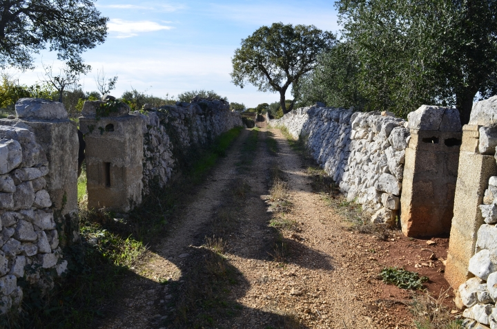 This Oct. 27, 2017 photo shows a typical country lane in the Valle d'Itria in Italy's Puglia region. The valley is a place of rolling green hills, meandering country roads, endless stone walls, singular cone-roofed country cottages, rock-solid peasants and earthy food and wine. (Cain Burdeau via AP)