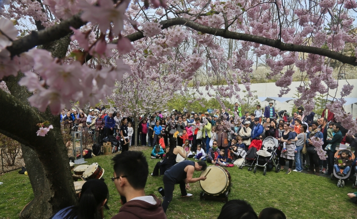 FILE - In this April 22, 2014, file photo, members of the traditional Japanese ensemble Taiko Masala, perform during a preview of the Sakura Matsuri festival at the Brooklyn Botanic Garden in New York. The festival has performances, demonstrations and exhibitions from Japanese culture. (AP Photo/Bebeto Matthews, File)