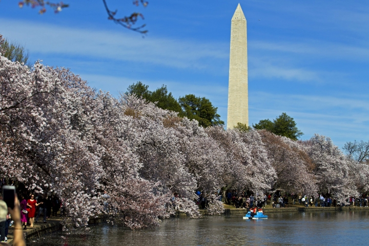 FILE - In this April 2, 2017, file photo, people walk along the Tidal Basin, visiting the cherry blossoms in Washington. (AP Photo/Jose Luis Magana, File)
