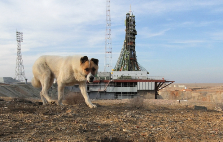A dog walks near the launch pad a few hours before the launch of the Soyuz-FG rocket booster with Soyuz MS-08 space ship carrying a new crew with at the Russian leased Baikonur cosmodrome, Kazakhstan, Wednesday, March 21, 2018. The Russian rocket carries Russian cosmonaut Oleg Artemyev, U.S. astronauts Richard Arnold and Andrew Feustel. (AP Photo/Dmitri Lovetsky)