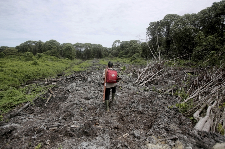 FILE - In this Thursday, Aug. 10, 2017, file photo, a conservationist carries a medical pack and tranquilizer rifle during a rescue operation for orangutans trapped at a swath of damaged forest near a palm oil plantation in Tripa, Aceh province, Indonesia. Greenpeace is withdrawing from Forest Stewardship Council, the main global group for certifying sustainable wood products, saying it is failing to protect natural forests from exploitation. (AP Photo/Binsar Bakkara, File)