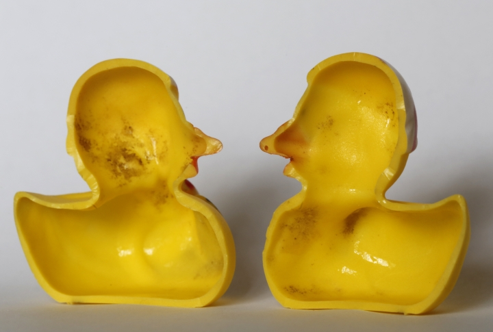 "The March 27, 2018 photo shows the inside of a rubber duck after it was cut open for the photo in Nauen, Germany. Swiss researchers now say the cute, yellow bath-time friends harbor a dirty secret: Microbes swimming inside. The Swiss Federal Institute of Aquatic Science and Technology says researchers turned up ""dense growths of bacteria and fungi"" on the insides of toys like rubber ducks and crocodiles.( AP Photo/Ferdinand Ostrop)"
