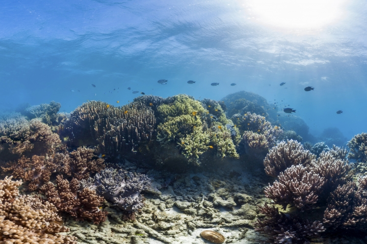 In this undated photo provided Sunday, April 8, 2018, by The Ocean Agency/XL Catlin Seaview Survey shows coral reefs in Lizard Island, Australia. Gold Coast-based Panedia worked in collaboration with Catlin Seaview Survey, the U.S. National Oceanic and Atmospheric Administration and the Chagos Conservation Trust to help developed Google Ocean Street View - a 360-degree look at dolphins, coral nurseries and even shipwrecks. (The Ocean Agency/XL Catlin Seaview Survey via AP)