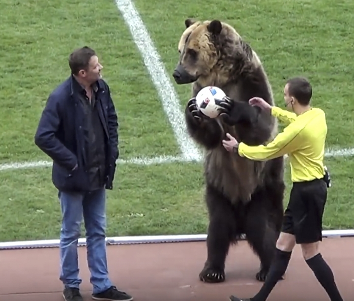 In this image taken from video provided by FC Angusht Nazran a bear performs before a Russian Second League soccer match between Angusht Nazran and Mashuk-KMV in Pyatigorsk, Russia on Sunday, April 15, 2018. The stunt, which has been condemned by animal rights groups, happened ahead of last Sunday's Russian Second League soccer match in the city of Pyatigorsk. (FC Angusht Nazran youtube channel via AP)