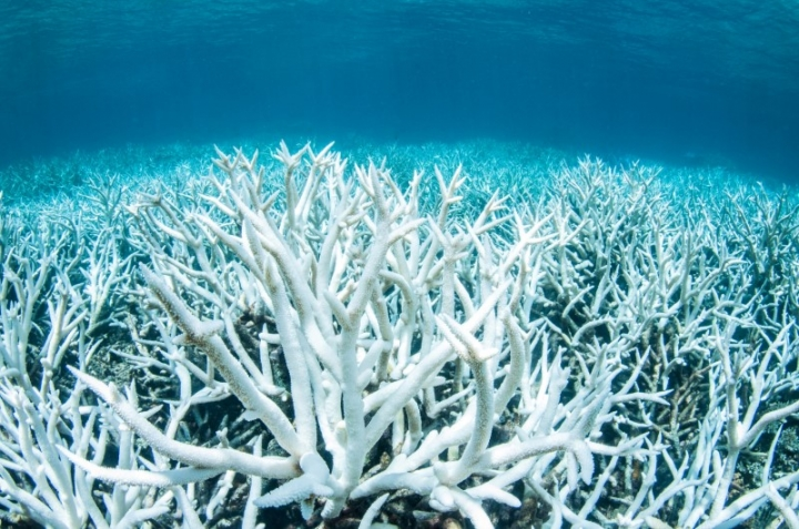 Bleached coral is photographed on Australia's Great Barrier Reef near Port Douglas, February 20, 2017 in this handout image from Greenpeace.         Greenpeace/Brett Monroe Garner/Handout via REUTERS
