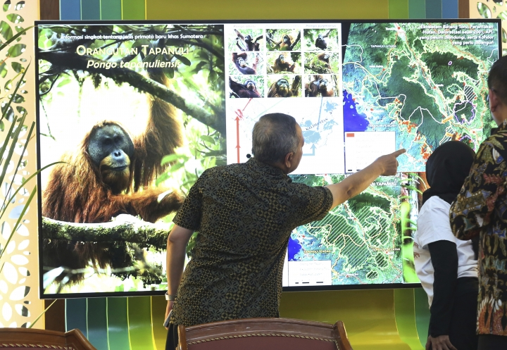 FILE - In this Nov. 3, 2017 file photo, Director General of Conservation of Natural Resources and Ecosystem at Indonesian Forestry Ministry Wiratno, center, inspects a screen displaying the map of Batang Toru Ecosystem in North Sumatra where a population of a new species of orangutans has been found, during a press conference in Jakarta, Indonesia. Scientists are calling for cancellation of a Chinese-backed hydroelectric dam in Indonesia that threatens the habitat of the newly discovered Pongo tapanuliensis numbering only 800 animals. (AP Photo/Tatan Syuflana, File)