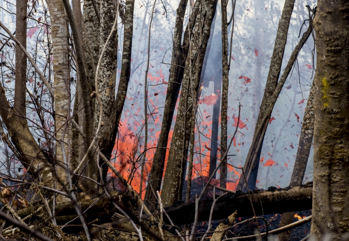 A fissure erupts near the intersection of Kahukai Street and Leilani Avenue in Leilani Estates, Tuesday, May 8, 2018, in Pahoa, Hawaii. Hawaii County officials issued mandatory evacuation orders for two neighborhoods — Leilani Estates and Lanipuna Gardens — on Thursday when the lava first emerged. There are 14 lava-producing fissures in Leilani Estates, after two new ones formed Tuesday. (Hollyn Johnson/Hawaii Tribune-Herald via AP)