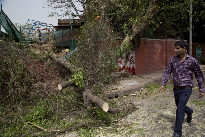 A commuter walks past an uprooted tree from Sunday's sudden storm in New Delhi, India, Monday, May 14, 2018. Powerful wind and rain storms have swept across northern India, with authorities saying many people have been killed. Meteorological officials say winds reached up to 109 kilometers per hour (68 miles per hour) Sunday, blowing down trees and power lines and demolishing homes. (AP Photo/Manish Swarup)