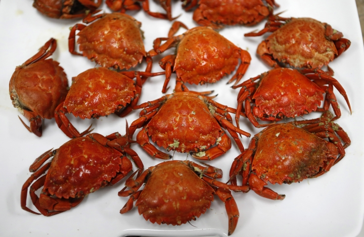 A plate of cooked green crabs is seen, Wednesday, June 6, 2018, in Portland, Maine. Food scientists have gathered in Portland to find a way to monetize invasive green crabs, which are a major pest in shellfish harvesting communities. (AP Photos/Robert F. Bukaty)