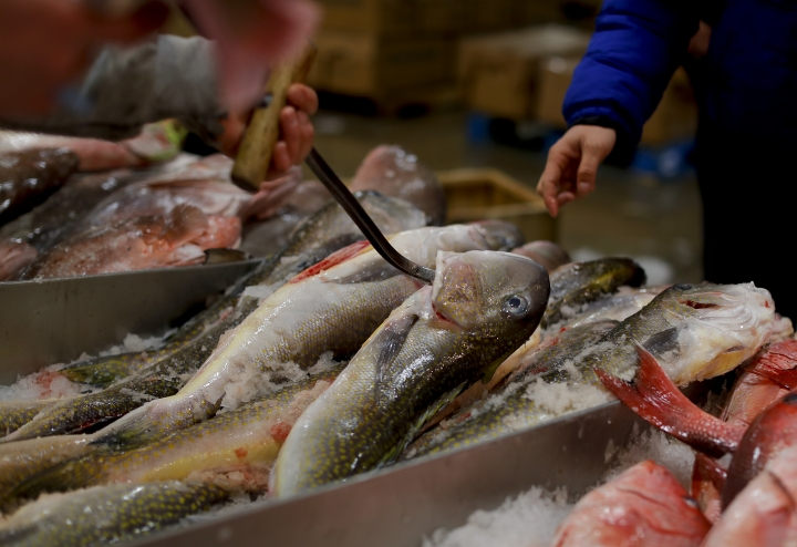 A fishmonger pulls tilefish for a buyer at the New Fulton Fish Market in New York on Monday, Jan. 8, 2018. The U.S. seafood industry is worth $17 billion a year, more than 90 percent of which is made up of imports. (AP Photo/Julie Jacobson)