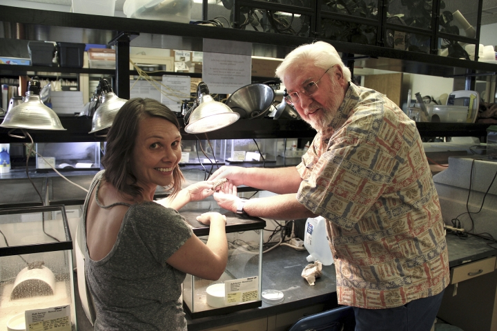In this July 2017 image provided by the University of Nevada, Reno, Dick Tracy, right, a biology professor at the University of Nevada, Reno, and Michelle Gordon, one of his biology graduate students, hold a rare Dixie Valley toad in his laboratory on the Reno, Nev., campus. The U.S. Fish and Wildlife Service agreed on Tuesday, June 26, 2018, to consider Endangered Species Act protection for the toad in northern Nevada's high desert where one of the biggest producers of geothermal energy in the nation wants to build another power plant. (Mike Wolterbeek/University of Nevada, Reno via AP)