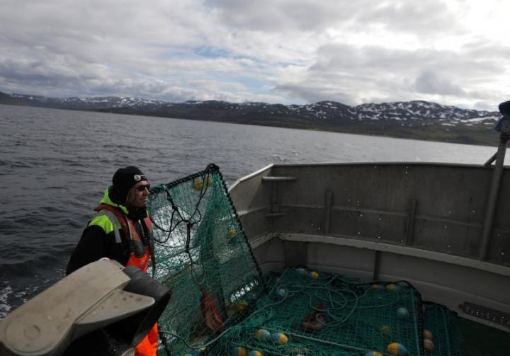 Sea Sami fisherman, Einar Juliussen, 54, fishes for king crabs in Repparfjord, Norway, June 13, 2018. REUTERS/Stoyan Nenov