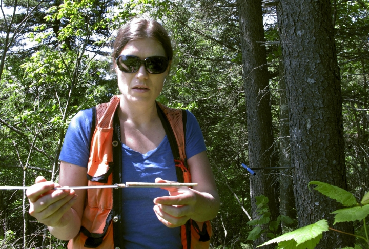 In this June 12, 2018, photo, Alexandra Kosiba, staff scientist with the Forest Ecosystem Monitoring Cooperative at the University of Vermont, displays a core sample she took from a red spruce tree on Mount Mansfield in Stowe, Vt. Kosiba led a study that found that the red spruce, once heavily damaged by acid rain, is rebounding in five Northeast states. (AP Photo/Lisa Rathke)