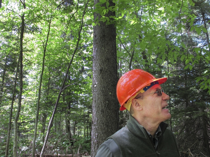 In this June 12, 2018, photo, U.S. Forest Service scientist Paul Schaberg stands near a healthy red spruce tree growing on Mount Mansfield in Stowe, Vt. Schaberg is co-author of a new study that found that the tree species, once heavily damaged by acid rain, is rebounding in five Northeast states due to stricter air pollution regulations and a changing climate. (AP Photo/Lisa Rathke)