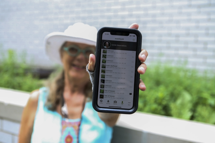 In this July 27, 2018 photo, Susan Hewitt poses for a picture showing her profile on iNaturalist, the app where she records all the plants and animals she finds in New York City. With 7,379 observations and 736 species identified, Hewitt is the most active member of the EcoFlora project. .(AP Photo/Emiliano Rodriguez Mega)